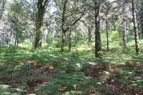 Vista do bosque na primavera